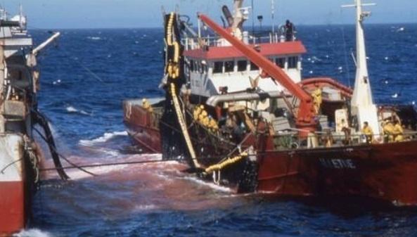 Mauritanie : Mainlevée de la saisie de 5 navires de pêche étrangers